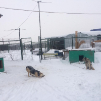 Посещение приюта бездомных животных в поселке Столбище_2