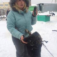 Посещение приюта бездомных животных в поселке Столбище_4