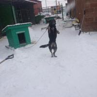 Посещение приюта бездомных животных в поселке Столбище_5