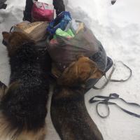 Посещение приюта бездомных животных в поселке Столбище_6